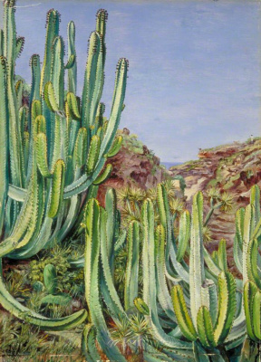 Marianna North. Cacti at the seaside, Tenerife