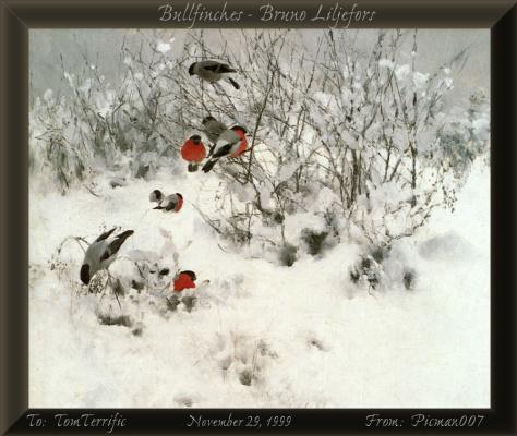 Дарвин. Птицы зимой