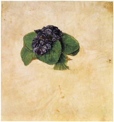 Albrecht Durer. Bouquet of violets