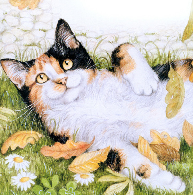 Debbie Cook. A cat lying on the grass