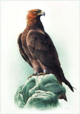 Цзэн Сяо Лиан. Птицы 41