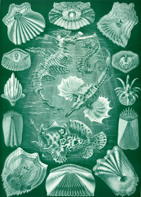 """Ernst Heinrich Haeckel. Bony fish. """"The beauty of form in nature"""""""