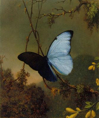 Мартин Джонсон Хед. Голубая бабочка