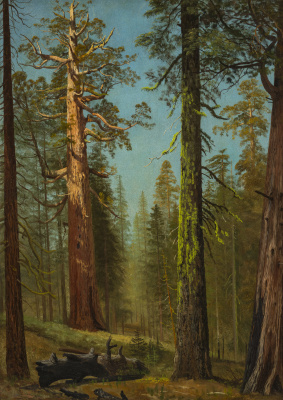 Альберт Бирштадт. Гигантская секвойя Гризли, Марипоза-Гроув, Калифорния