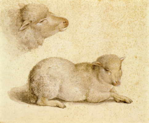 Hans Holbein The Younger. A resting lamb and a lamb's head