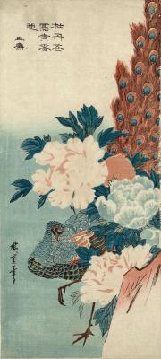 Утагава Хиросигэ. Павлин скрывается за скалой и цветущими пионами