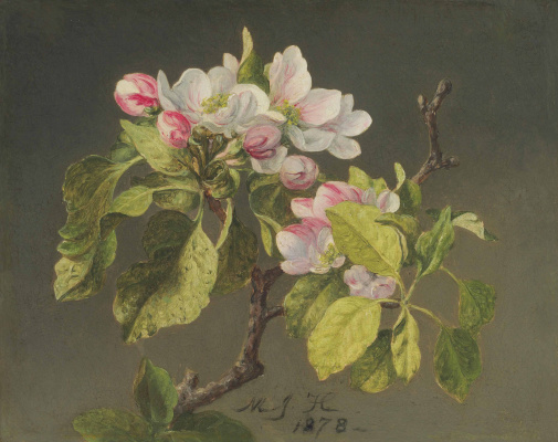 Martin Johnson Head. Blooming apple tree