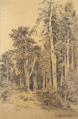 Опушка леса. 1870 - 1880-е  графитный карандаш