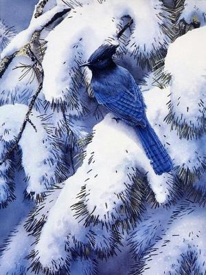 Сьюзан Бордет. Зимний блюз - стеллерова черноголовая голубая сойка