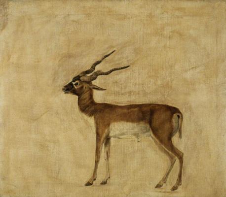 George Stubbs. Horned antelope (La Garenne)