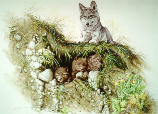 Дональд Руст. Волчата и их мать