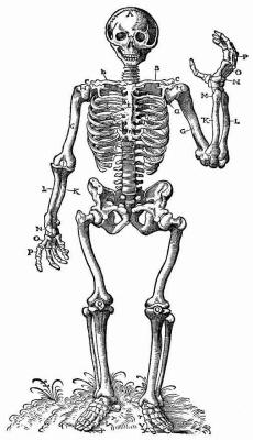 Ханс Бальдунг. Стоящий скелет — вид спереди