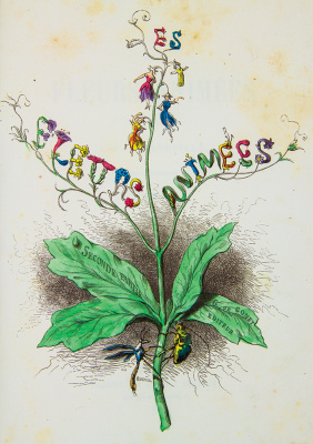 "Jean Inias Isidore (Gerard) Granville. A series of ""Animate Flowers"". Frontisis II"