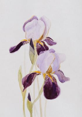Ekaterina Sergeevna Yurashevich. Irises