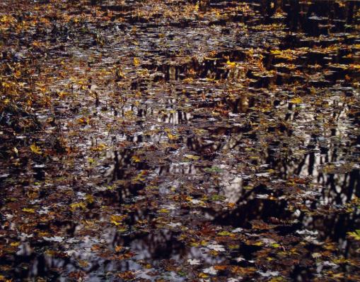 Christopher Burkett. Leaves on the river
