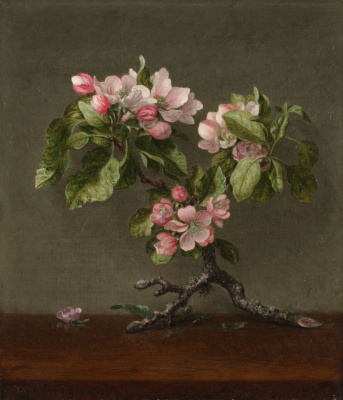 Martin Johnson Head. The branch of a blossoming apple tree