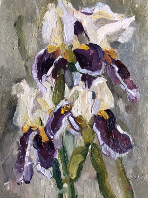 (no name). Irises
