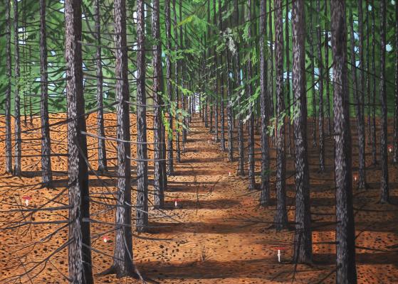 Vladimir Adamovich Ropot. Afforestation