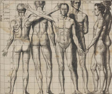 Самюэл ван Хогстратен. Введение в высшую школу живописи. Фигура мужчины