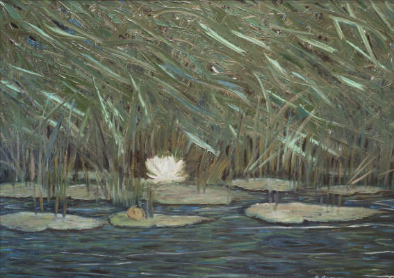 Albert Safiullin. A lone water Lily in the reeds