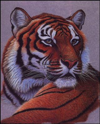 Грег Густавсон. Тигр