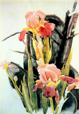 Charles Demuth. Flowers irises