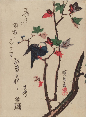 """Utagawa Hiroshige. White-headed dove on the maple branch. Series """"Birds and flowers"""""""