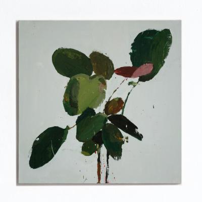 Миша Никатин. Plant with burgundy leaf