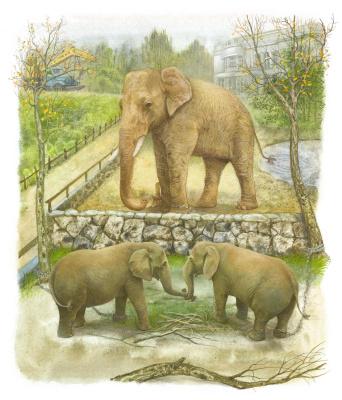 Vitaly Vasilevich Dudarenko. Elephants