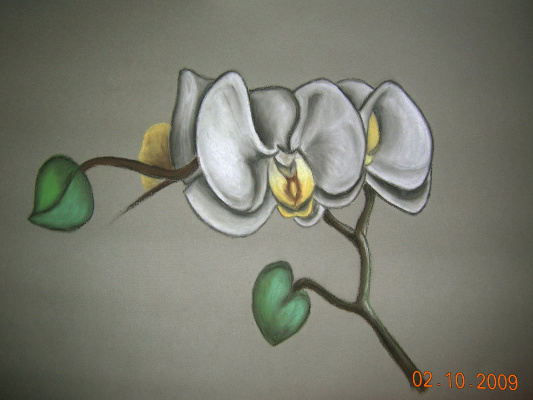 Александра Демидова. Орхидея