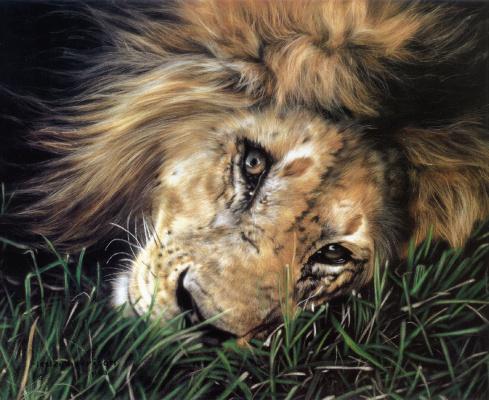 Leslie Harrison. Lion