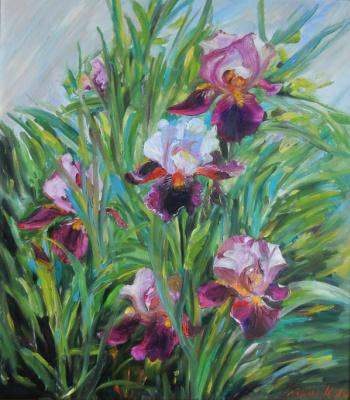 Marina Dmitrievna Razin. Irises