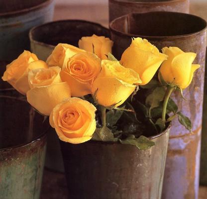 Мария Робледо. Желтые розы
