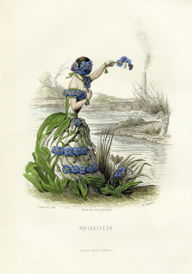 "Jean Inias Isidore (Gerard) Granville. Forget-me-not. The series ""Animate Flowers"""