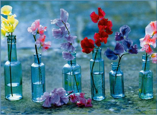Саймон Кейн. Цветы в бутылках