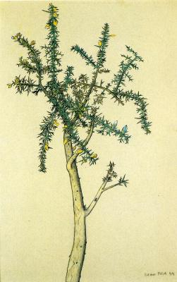 Люсьен Фрейд. Дерево