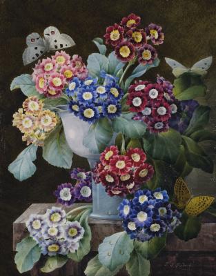 Пьер-Жозеф Редуте. Букет: соцветия примулы ушковой и бабочки