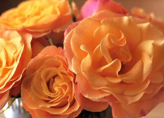 Мария Робледо. Незабываемые розы