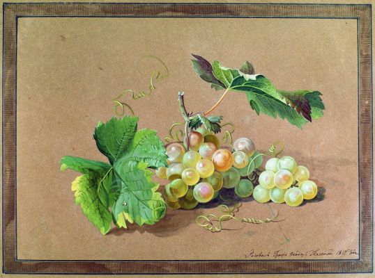 Fedor Petrovich Tolstoy. The branch of grapes