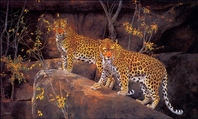Ким Дональдсон. Скала леопардов