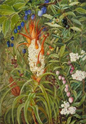 Марианна Норт. Кустарники с цветами и ягодами, Тасмания