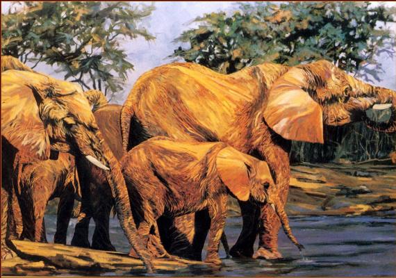 Терри Ли. Слоны у воды