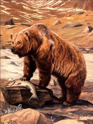 Луи Агассис Фуертес. Бурый медведь