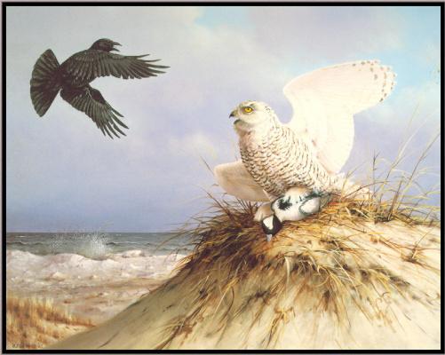 Оуэн Громм. Белая сова