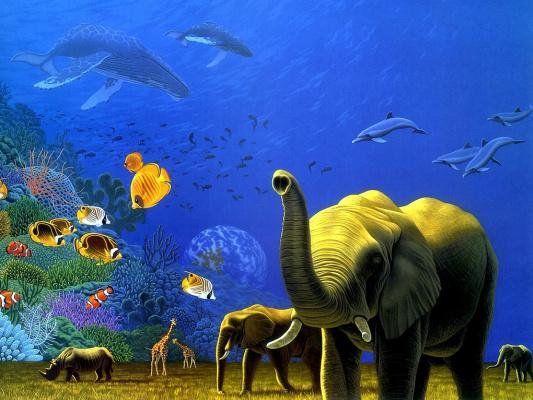 Шим Шиммель. Слоны