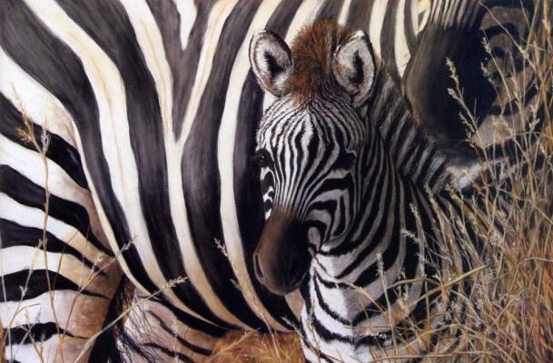 Салли Линн Дэвис. На стороне матери, маленькая зебра
