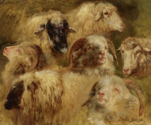 Rose Bonhur. Heads of sheep and rams