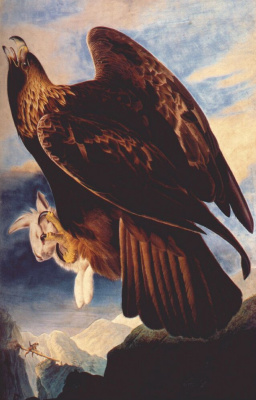 John James Audubon. Eagle