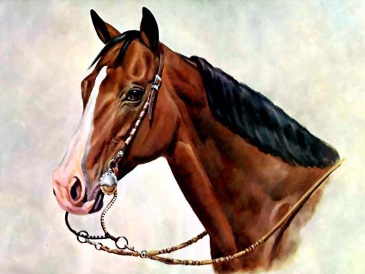 Дональд Шварц. Лошадь 13