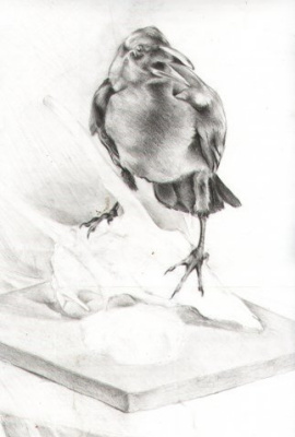 Sofia Sviridova. Raven